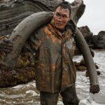Бивни якутского мамонта: контрабанда
