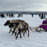 День оленевода – важнейший праздник на Ямале