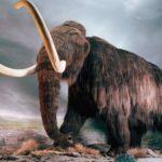 Из Еврейской АО пытались вывести бивни мамонта в Китай