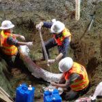 Строители на Алтае обнаружили двухметровый бивень мамонта