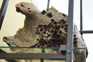 Гость из ледникового периода. Как в России находили мамонтов