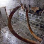 Музей мамонта открыли в Якутском селе Хатанга