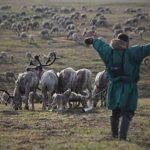В Магадане от сибирской язвы планируется вакцинация оленей