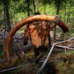Как устроена добыча бивней и костей в Якутии