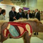Шерстистый носорог из Якутии на выставке в Москве