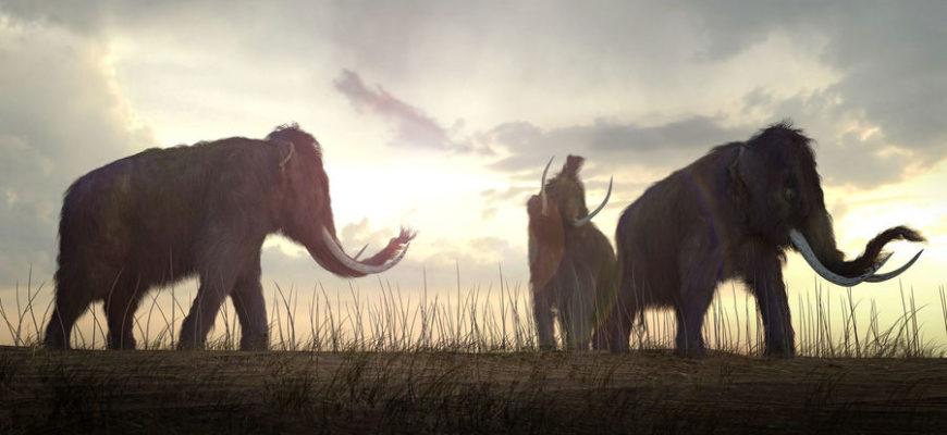 Бивень мамонта позволил отследить его путь от рождения до смерти